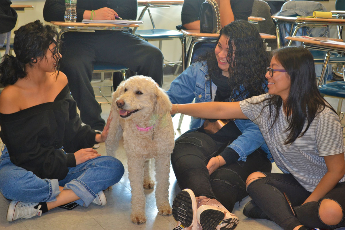 Nassau Community College students embraced a pair of therapy dogs during a study conducted by Huntington's Aaron Chin.